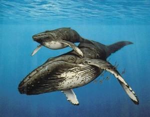 uzn_1375073230 кит